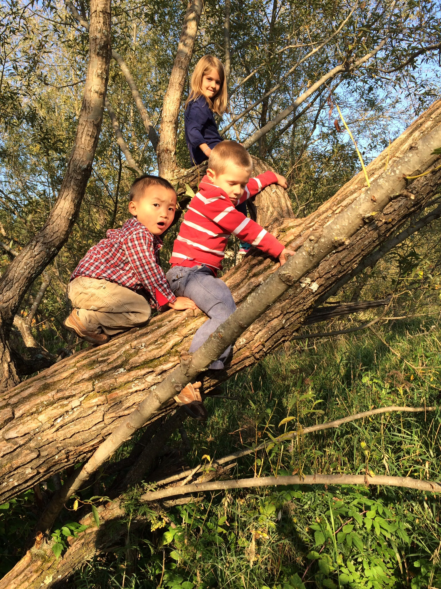 boys on a tree: what more fun playground is there?!