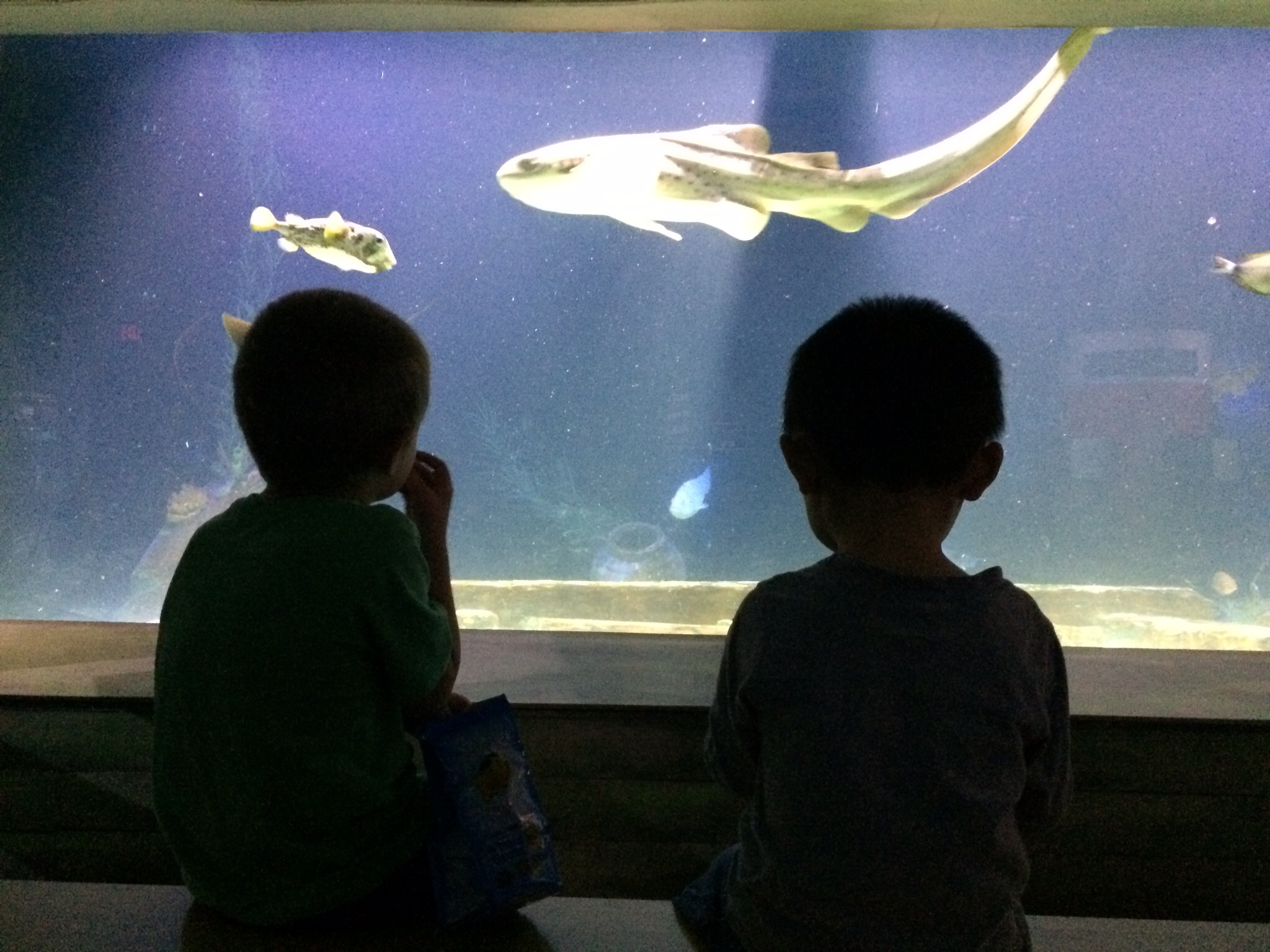 Brothers snacking at the aquarium.