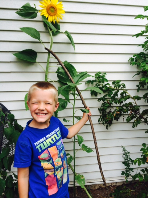 Grown from a seed he received last March at Kindergarten round up.  He has cared for this thing from Red Solo Cup to this!!